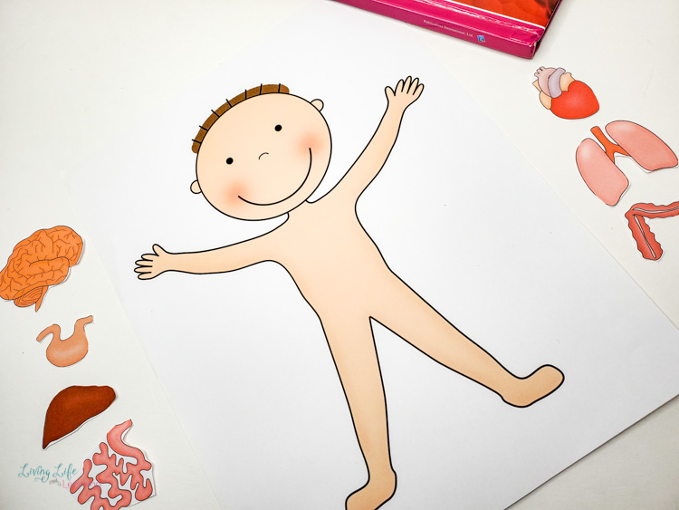 Preschool human body printable