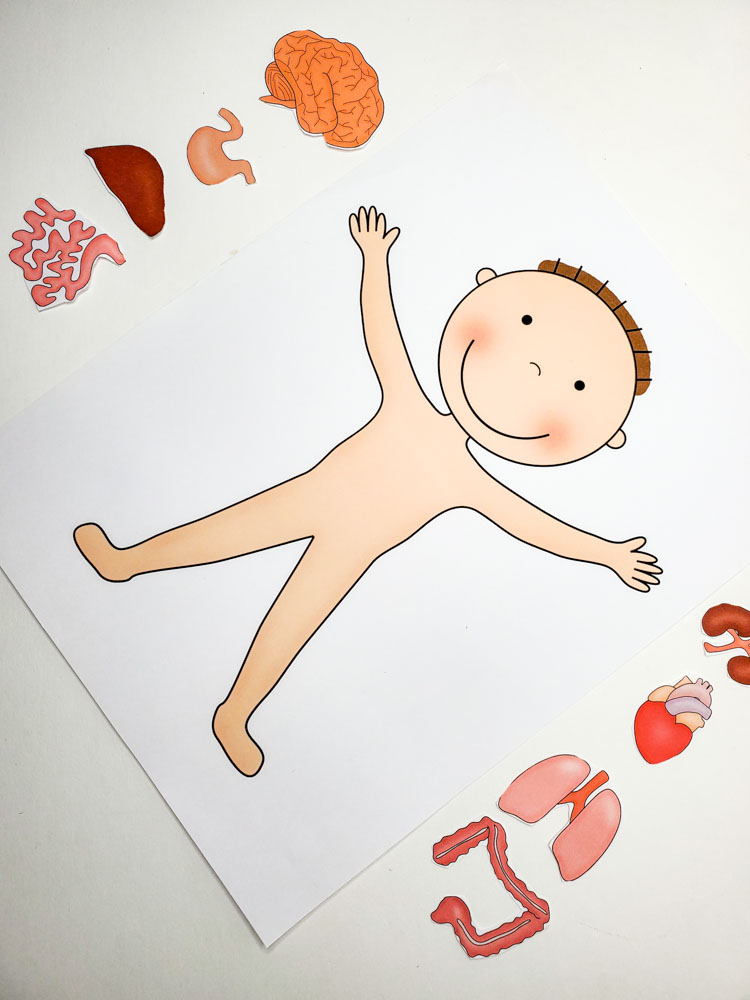 Preschool human body worksheet