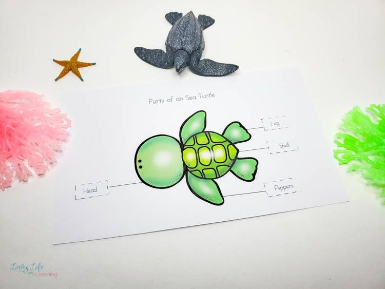 Parts of a sea turtle worksheet