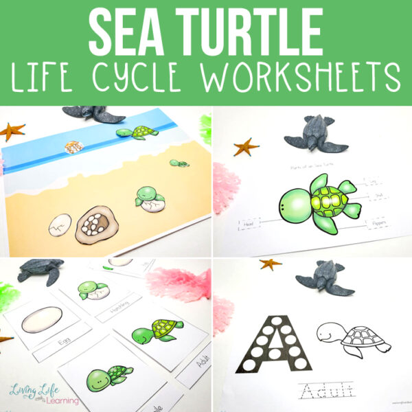 Full Sea Turtle Life Cycle Worksheets