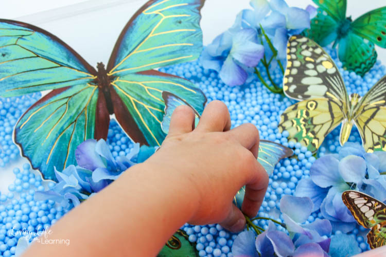 A child's hand explores this easy butterfly sensory bin.