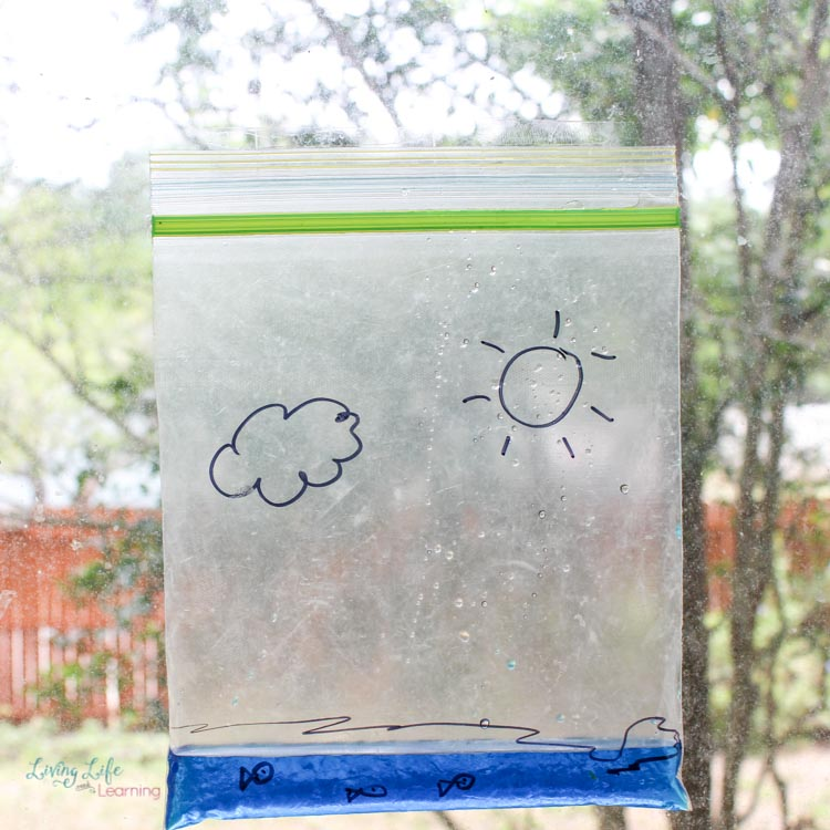 Water cycle bag experiment in sun