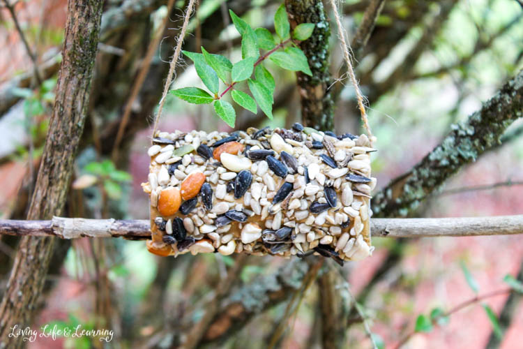 Have fun and excite your kids about science with this DIY peanut butter bird feeder for kids. Turn your kids on to local wildlife and exploring nature with birdwatching!