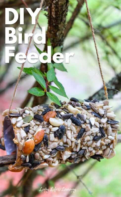 DIY Peanut Butter Bird Feeder