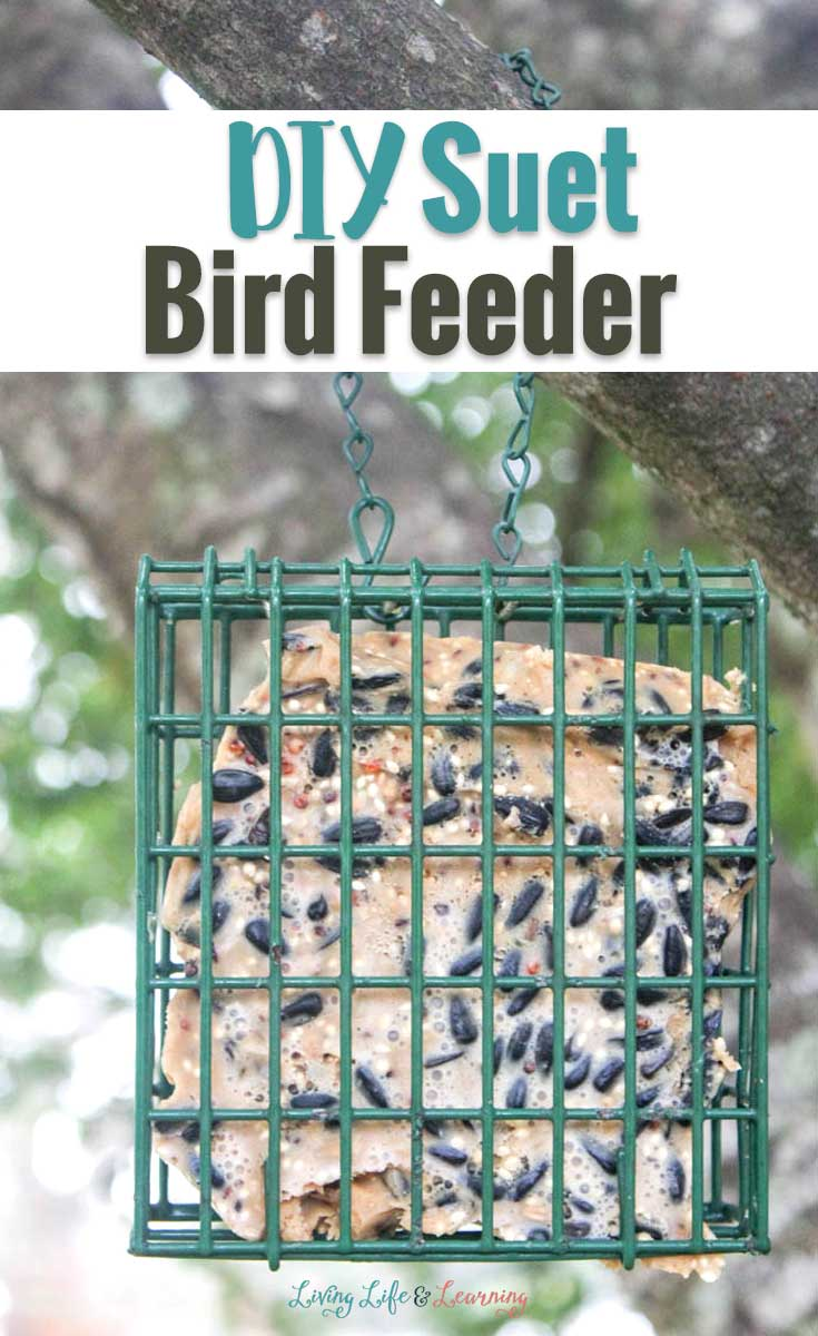DIY Suet bird feeder hanging in a tree
