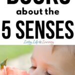 Best Books About the 5 Senses