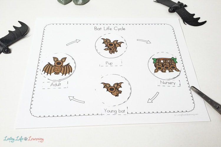 bat life cycle for kids worksheet
