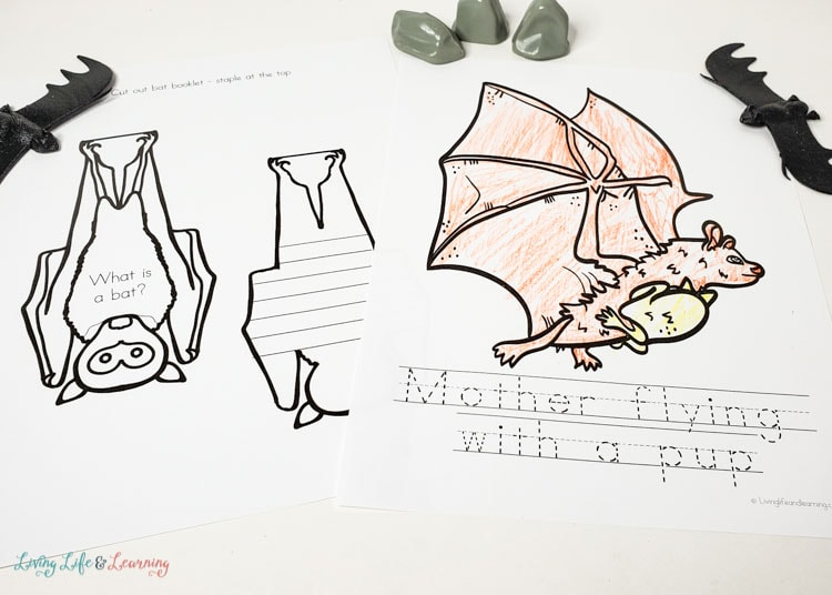 bat interactive notebook page and bat coloring page
