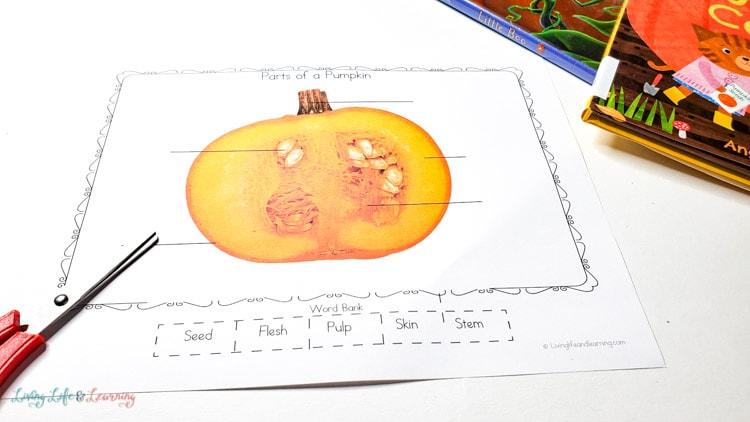 Parts of a pumpkin worksheet