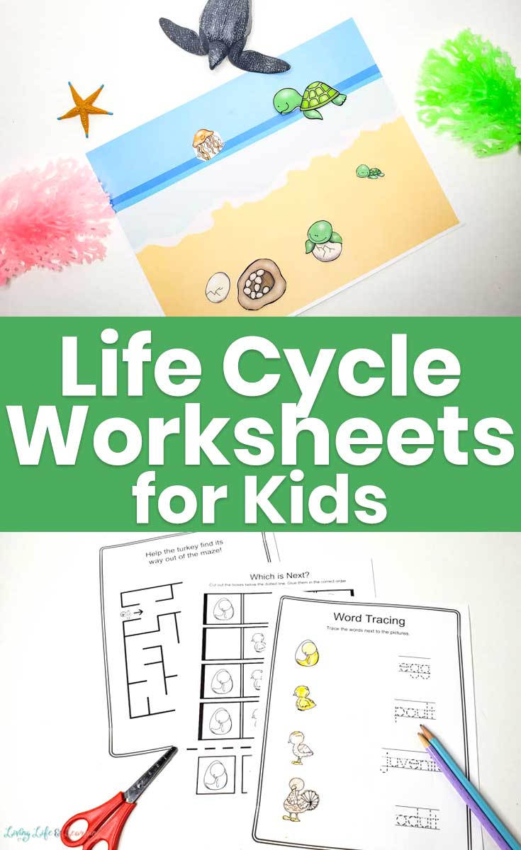 Life Cycle Worksheets for Kids
