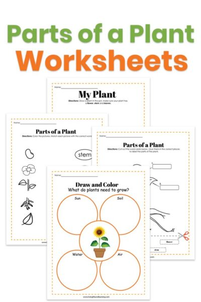 parts of a plant for kids