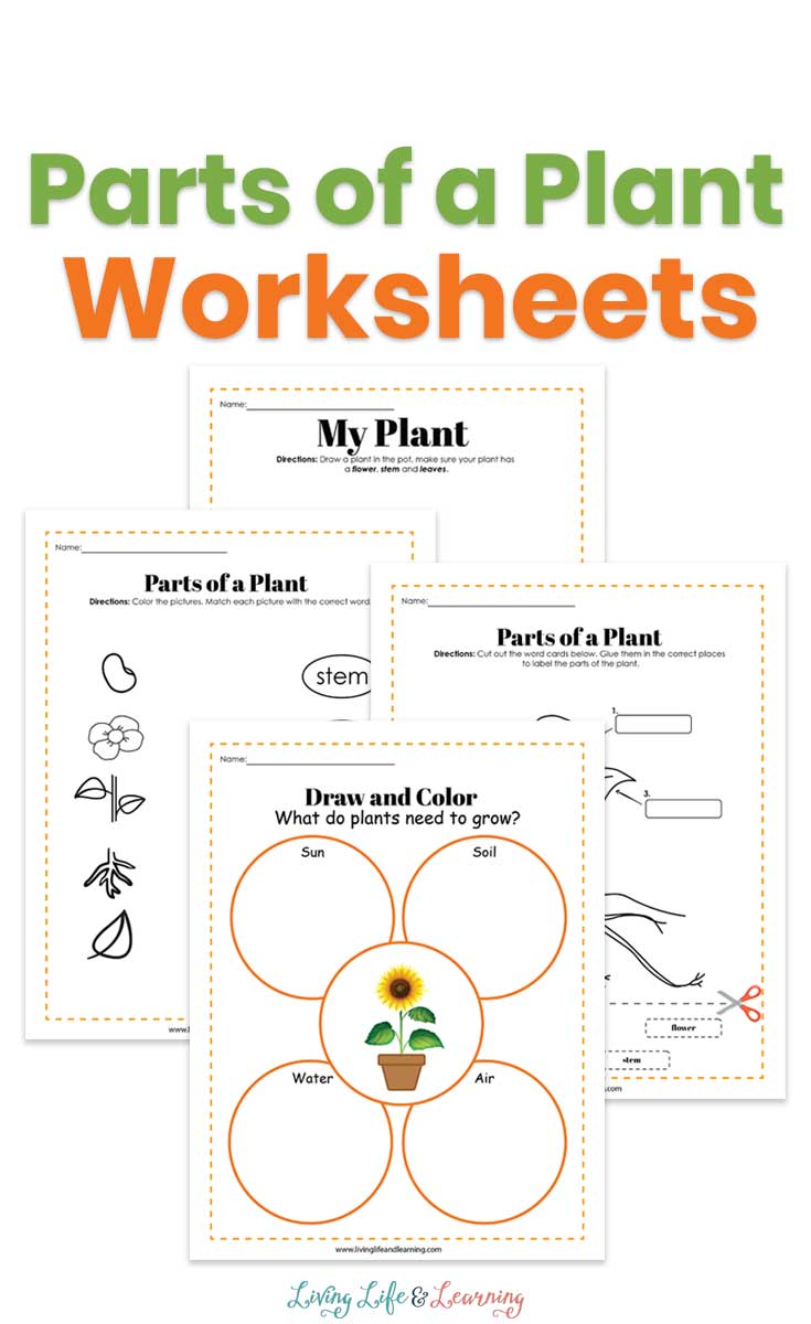 parts of a plant worksheets for kids