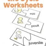 Turkey Life Cycle Worksheets for kids