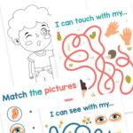 Fun 5 Senses Worksheets for Kids