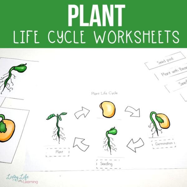 life cycle of plants