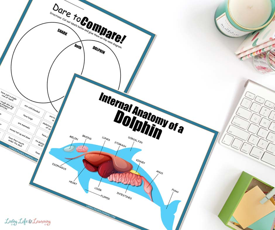 Printable Dolphin Worksheets