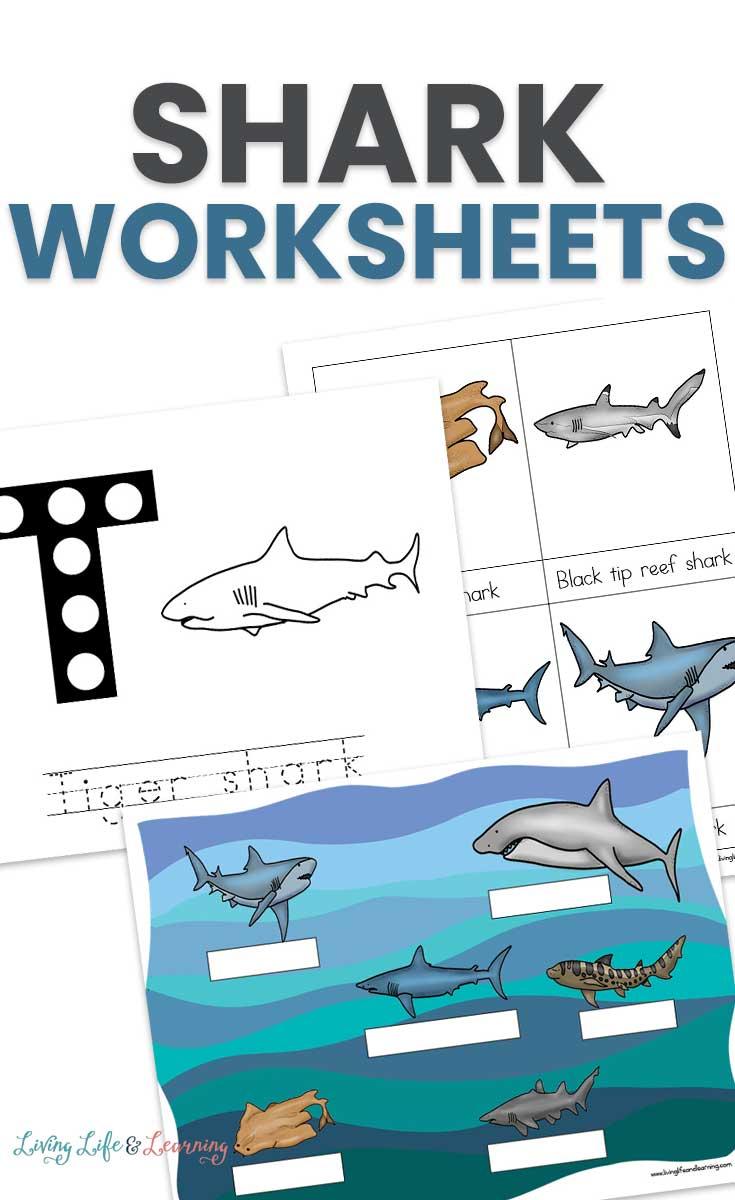 Sharks Worksheets for Kids