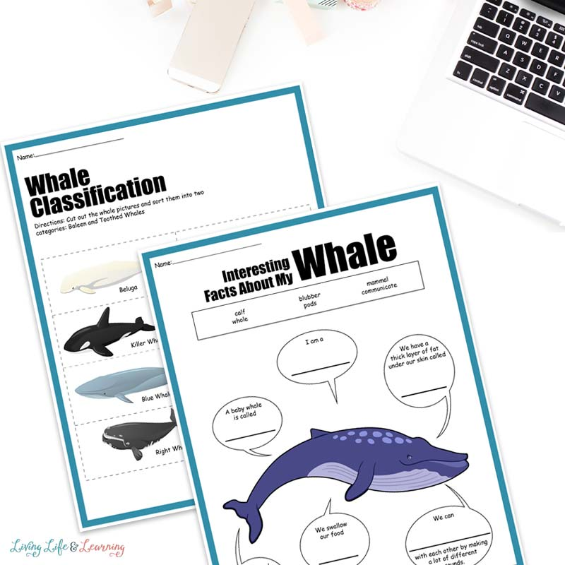 free whale worksheets for kids