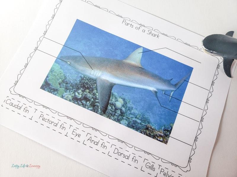 label the shark worksheet