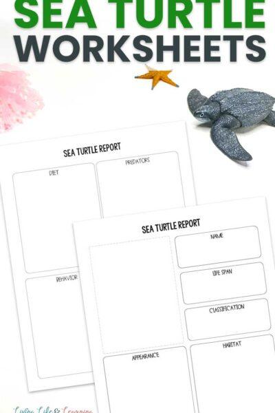 Sea Turtle Worksheets