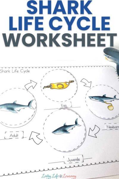 Shark Life Cycle Worksheets