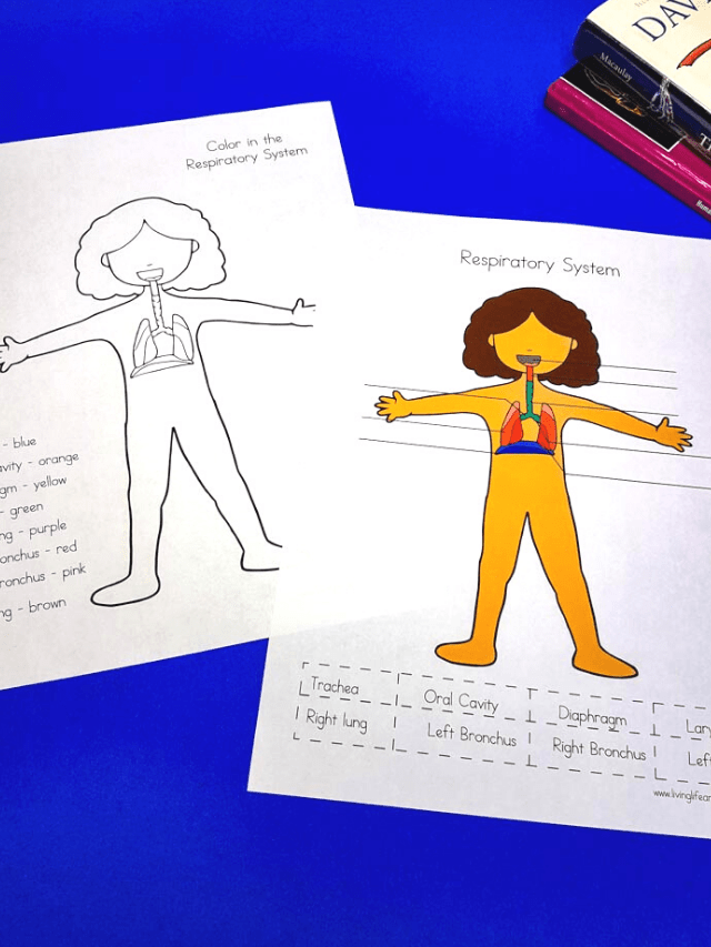 Human Body Worksheets Story