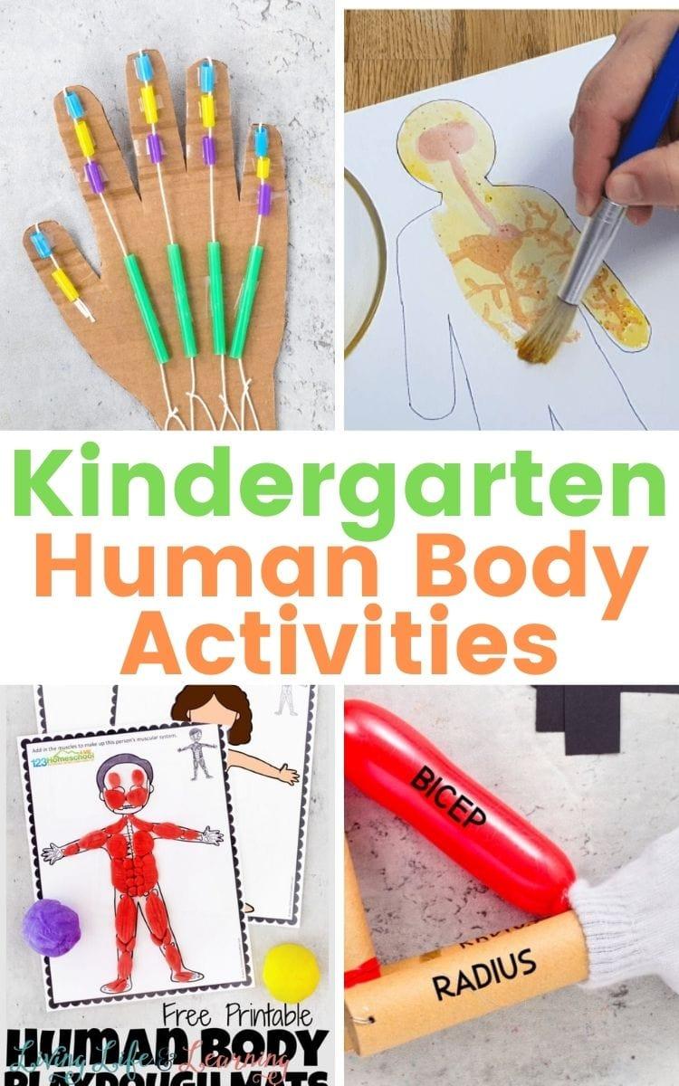 Human Body Activities for Kindergarten